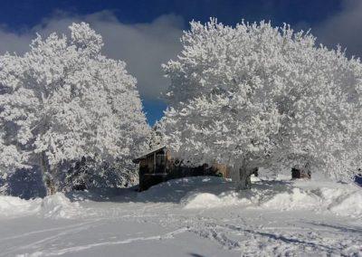 Haus verdeckt von Schneebaum